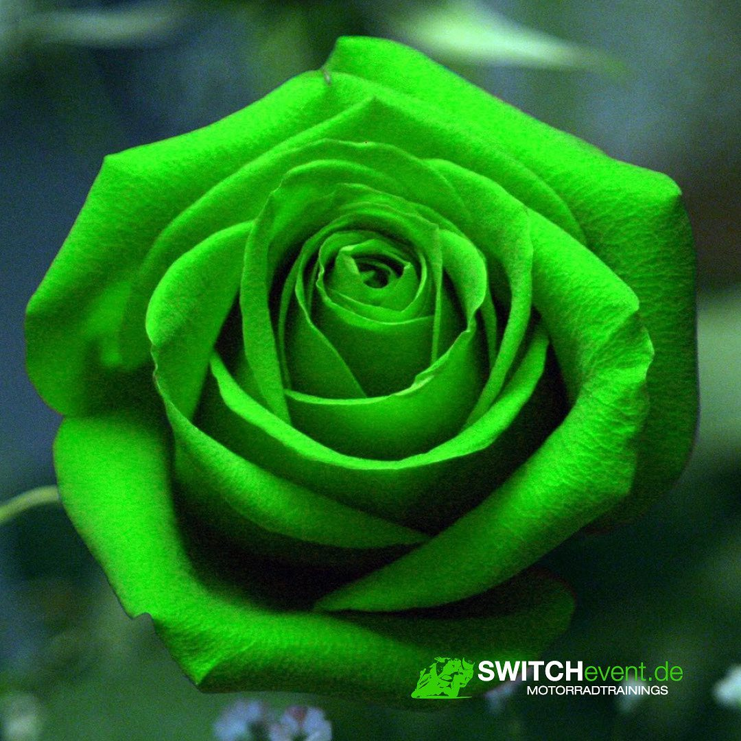 Photo by SWITCHevent Motorradtrainings on February 14, 2021. May be an image of rose and text that says 'SWITCHe SWITCHevent.de event. MOTORRADTRAININGS'.