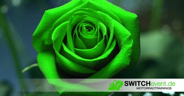Rose-SWITCHevent-1200x628